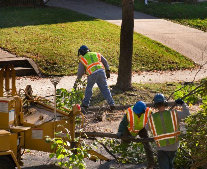 Training-Safety_TreeCrewChippingTree_iStock-172624371_web